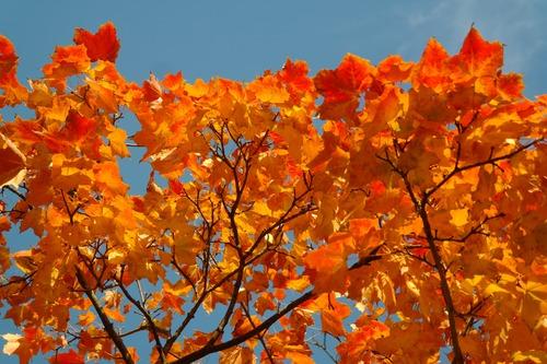 Beautiful maple leaf Stock Photo 06
