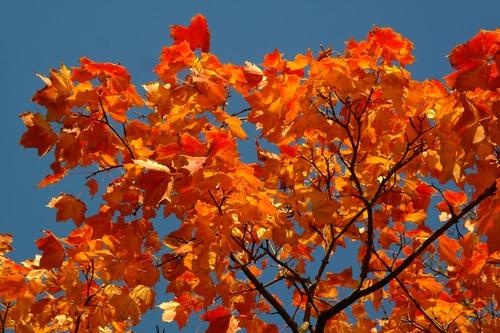 Beautiful maple leaf Stock Photo 08
