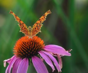 Beautiful spotted butterfly Stock Photo 01