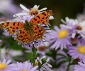 Beautiful spotted butterfly Stock Photo 02