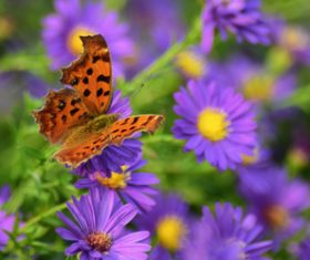 Beautiful spotted butterfly Stock Photo 03