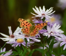 Beautiful spotted butterfly Stock Photo 04