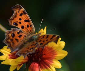 Beautiful spotted butterfly Stock Photo 05