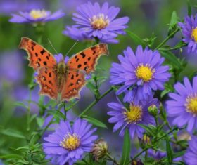 Beautiful spotted butterfly Stock Photo 06