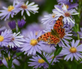 Beautiful spotted butterfly Stock Photo 07