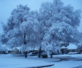 Covered with snow tree Stock Photo 02