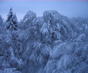 Covered with snow tree Stock Photo 04