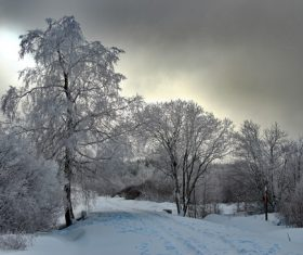 Covered with snow tree Stock Photo 05