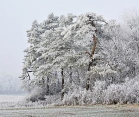 Covered with snow tree Stock Photo 07