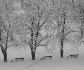 Covered with snow tree Stock Photo 10