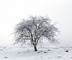 Covered with snow tree Stock Photo 11