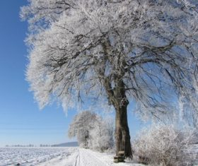 Covered with snow tree Stock Photo 12