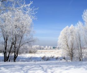 Covered with snow tree Stock Photo 14
