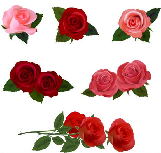 Different Roses graphic vectors