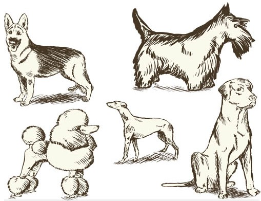 Different Vintage Dogs art set vector