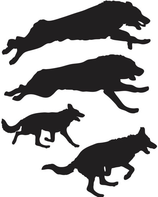 Different Wolves set vector