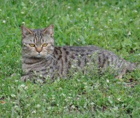 Dragon-Li resting on the grass Stock Photo