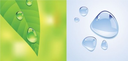 Drops water and green Leaf vector