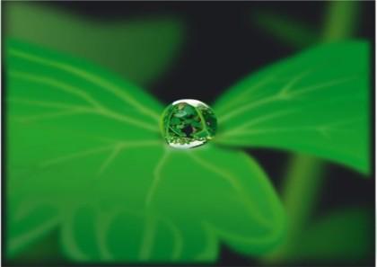Drops with plants vectors graphic