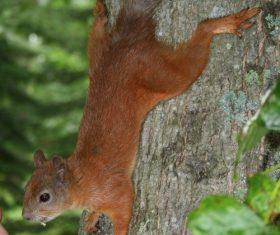 Feeding little squirrels Stock Photo
