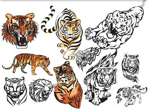 Fierce tigers graphic design vector