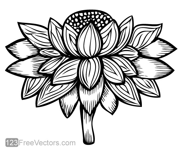 Flower Image vector