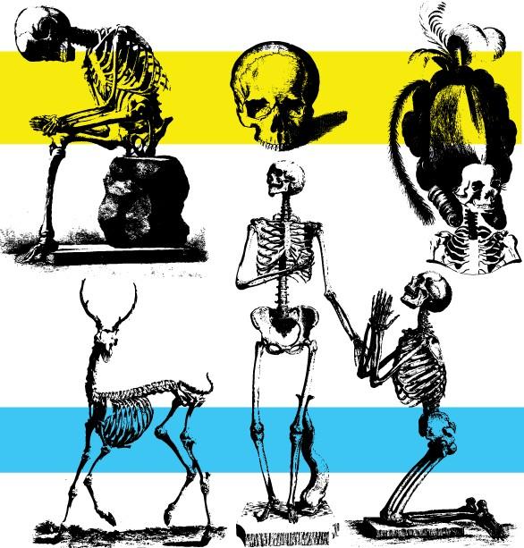 Free Skeleton Art vector