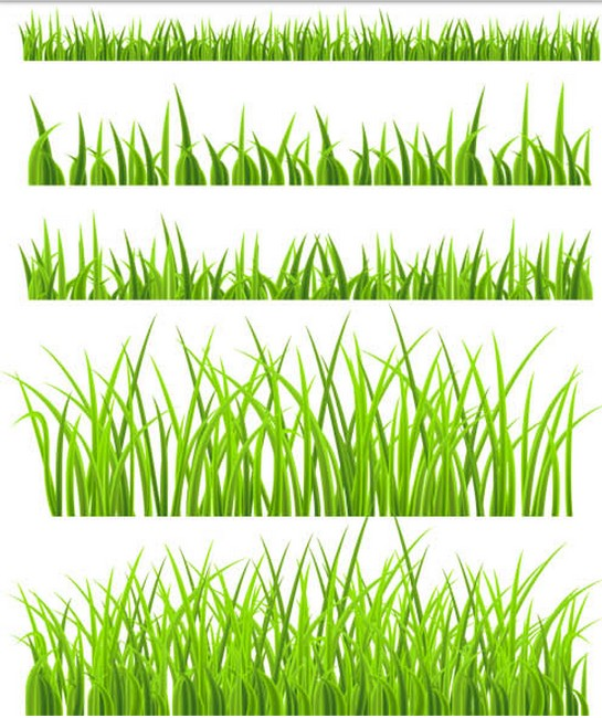 Green Grass graphic vector