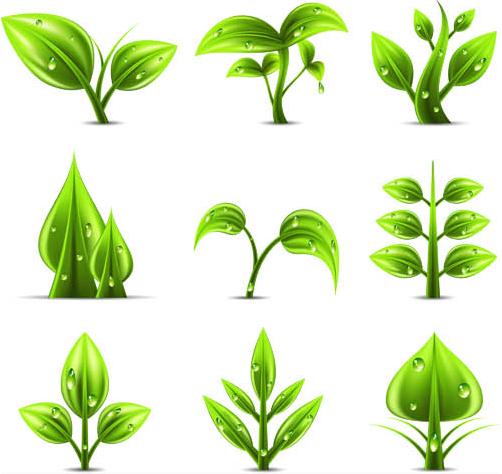 Green Plants graphic set vector