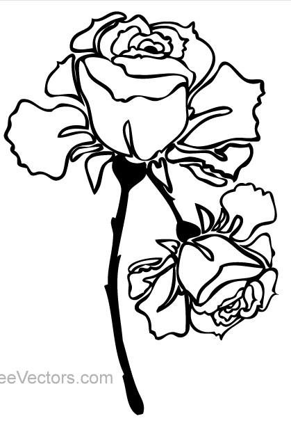 Hand Drawn Rose Image vector design