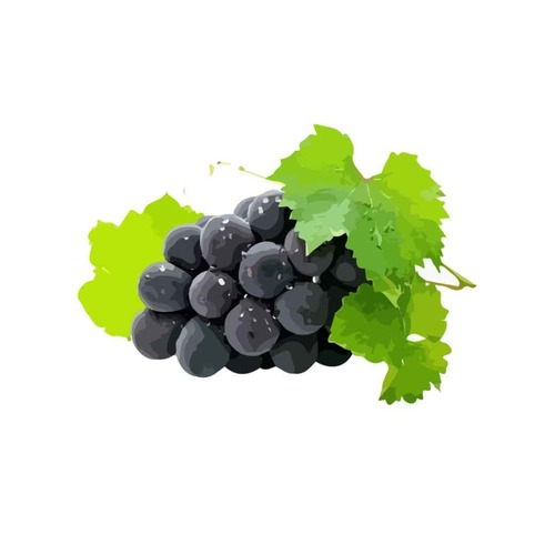 Hand drawn purple grape vector