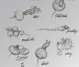 Hand drawn sketch vegetables vector