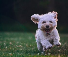 Happy puppy running Stock Photo