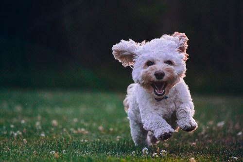 Happy puppy running Stock Photo