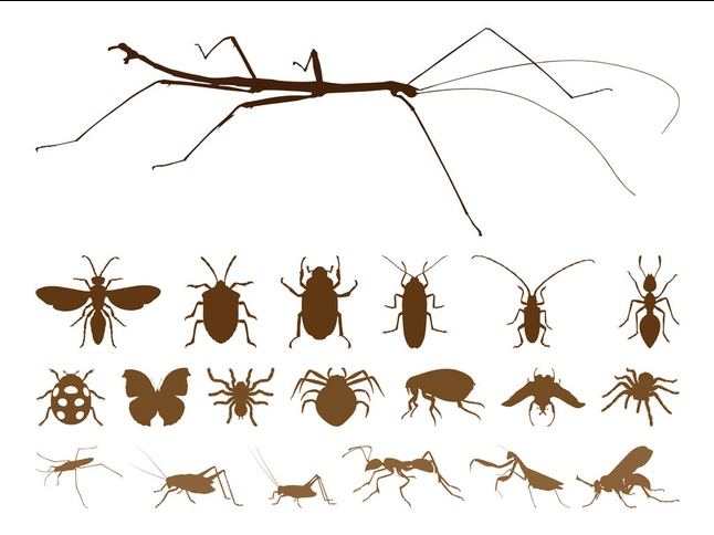 Insect Silhouettes set vector