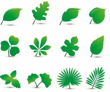 Leaf free design vectors