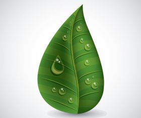 Leaves and dewdrop illustration vector 08