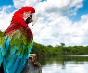 Macaw on the wood by the lake Stock Photo