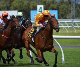 Nervous thrilling horse racing Stock Photo 01