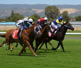 Nervous thrilling horse racing Stock Photo 06
