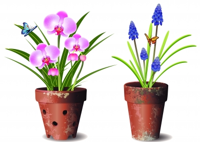 Orchids flower pot Free vector