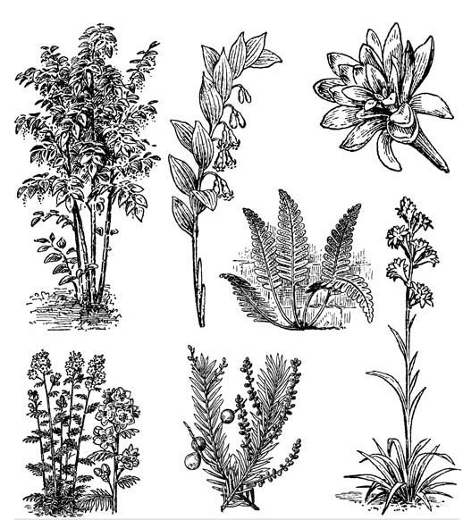 Ornate Floral Elements (Set 10) vector