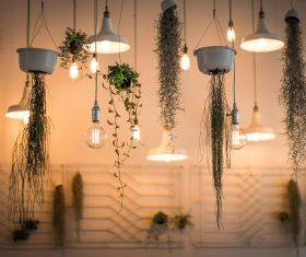 Plant vine with chandelier Stock Photo