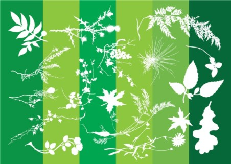Plants Silhouettes Nature Graphics vector