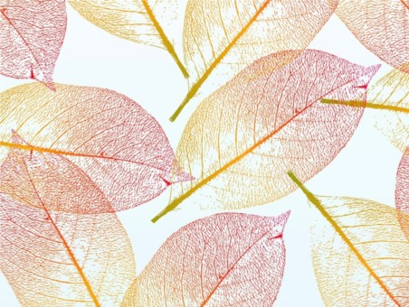 Pretty Autumn Leaves vector