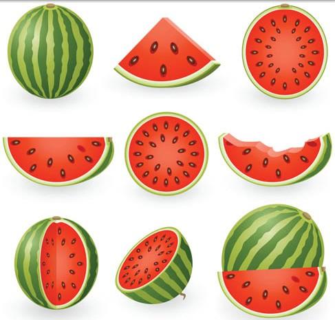 Ripe Juicy Melons vector