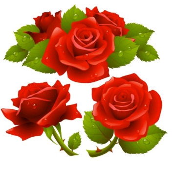 Rose graphic design vectors