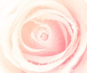 Rose soft pink blur background Stock Photo 03