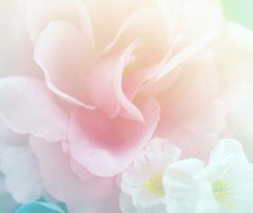 Rose soft pink blur background Stock Photo 05