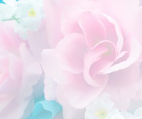 Rose soft pink blur background Stock Photo 07